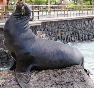 Aquapark Neeltje Jans